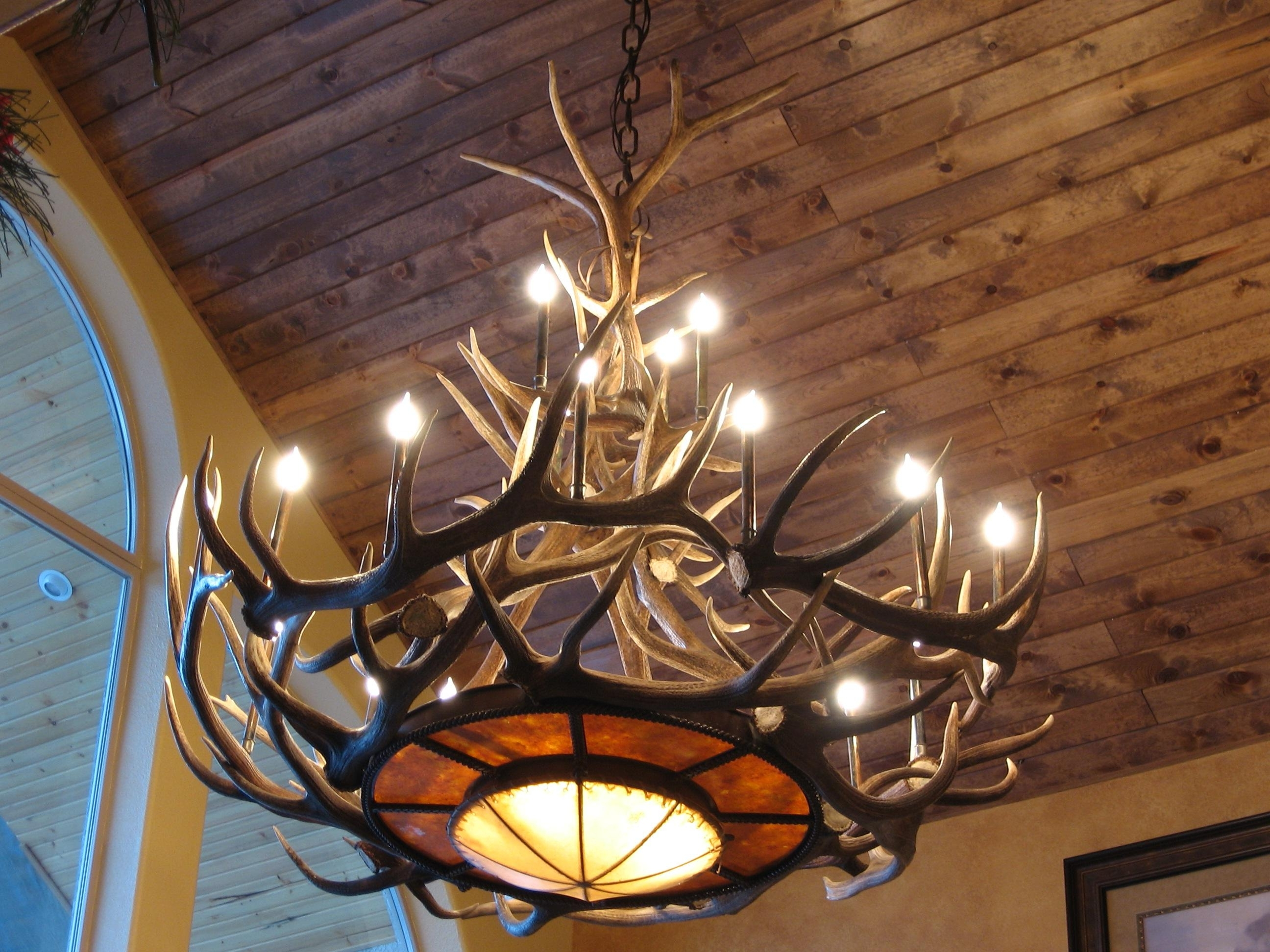 Current Tweed's Rawhide Mica Elk Antler Chandelier Regarding Antler Chandelier (View 6 of 15)