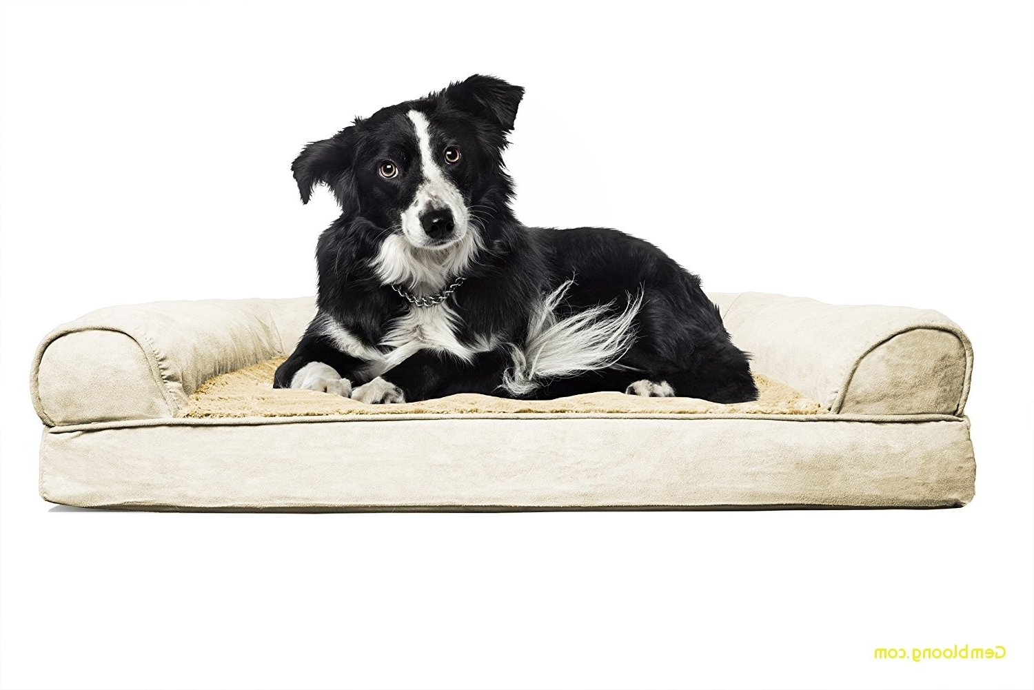 Dog Chaise Lounges Intended For 2018 Chaise Lounge Dog Bed Beautiful Sofa Dog Bed Two Tone Faux Fur (View 2 of 15)