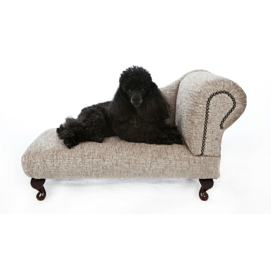 Featured Photo of Dog Chaise Lounges