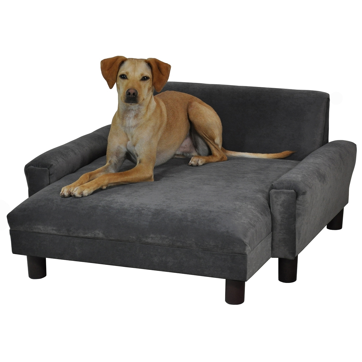 Dog Chaise Lounges With Regard To 2017 Modern Dog Chaise Lounge (View 7 of 15)