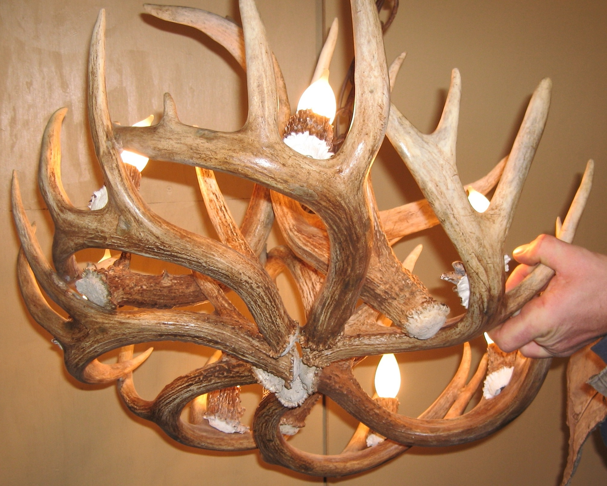 Recent Antler Chandeliers And Lighting Inside Whitetail Deer Antler Chandelier (View 11 of 15)