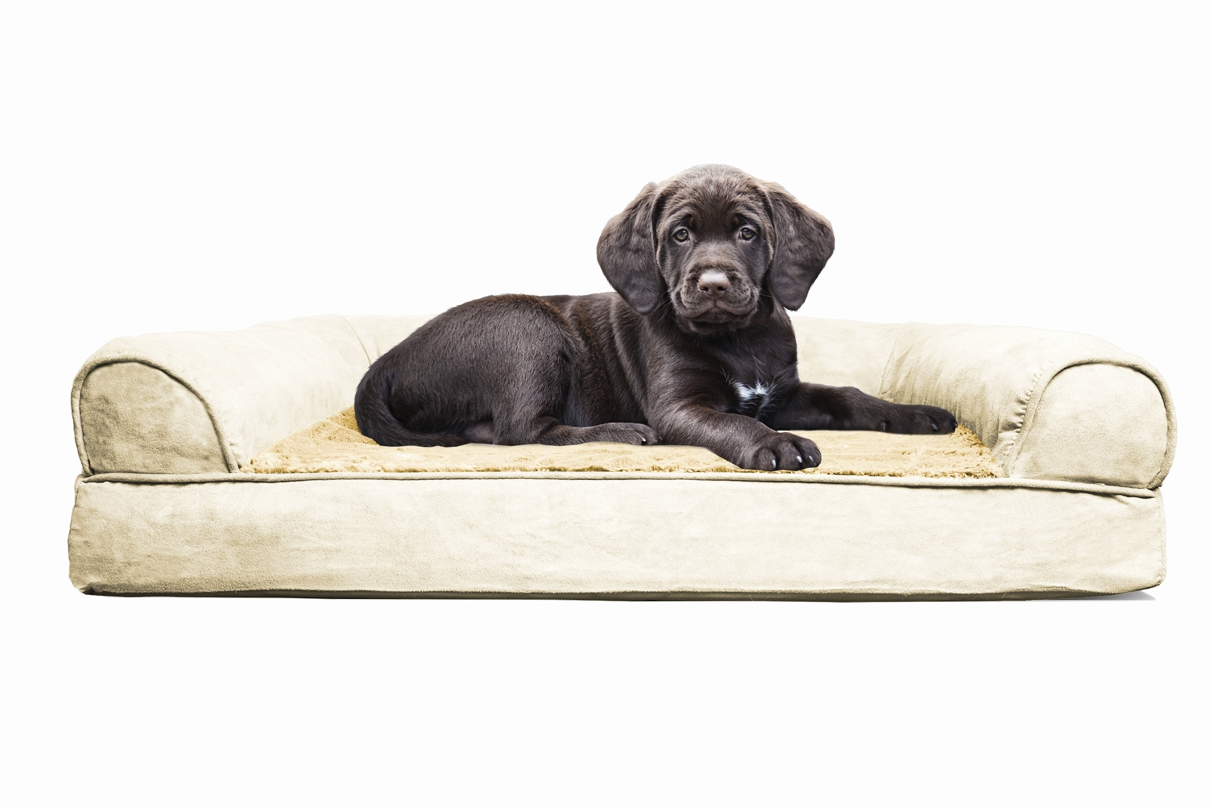 Recent Sofas : Leather Dog Couch Small Pet Sofa Leather Dog Chair Dog Pertaining To Dog Chaise Lounges (View 6 of 15)