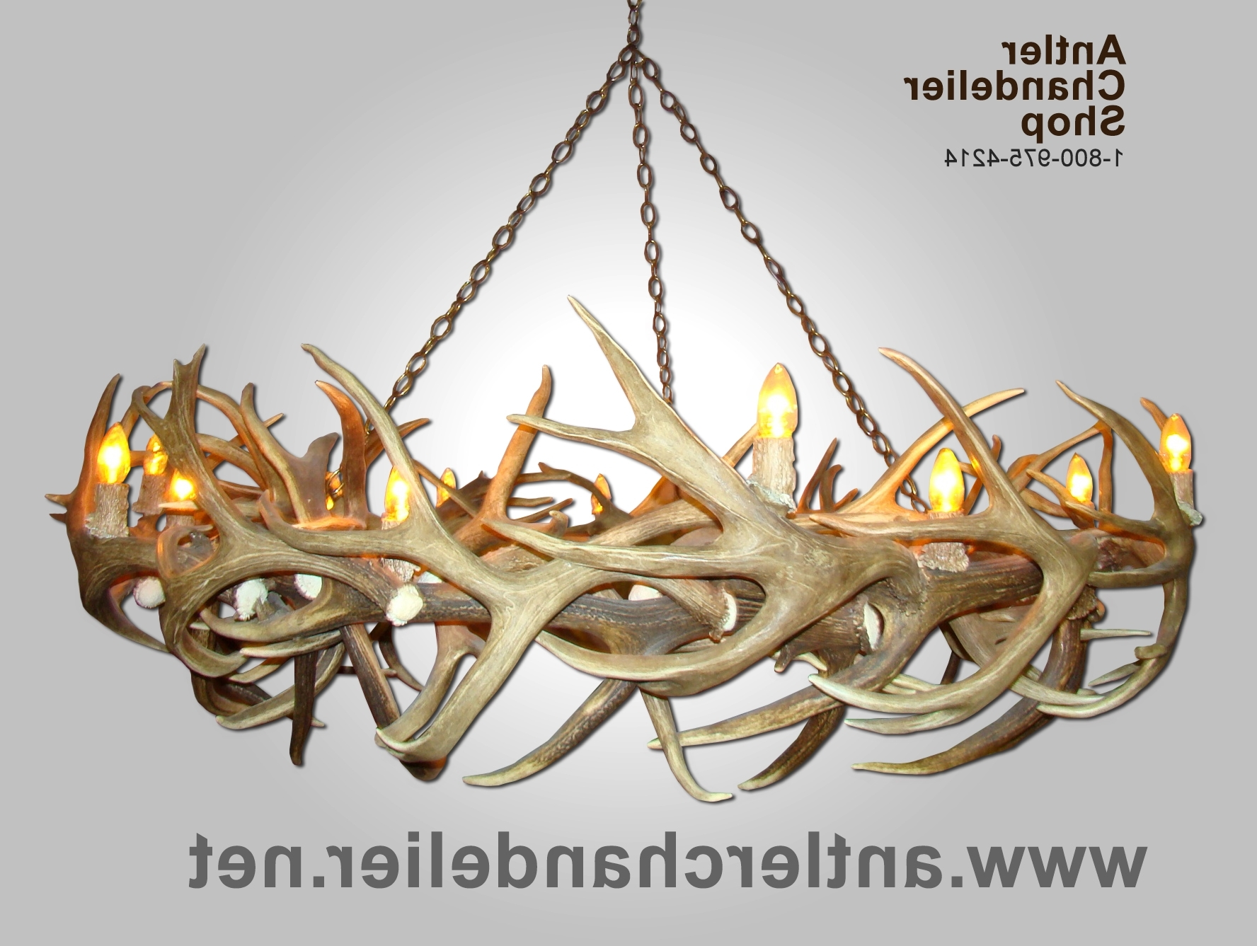 Xl Antler Chandeliers (View 6 of 15)