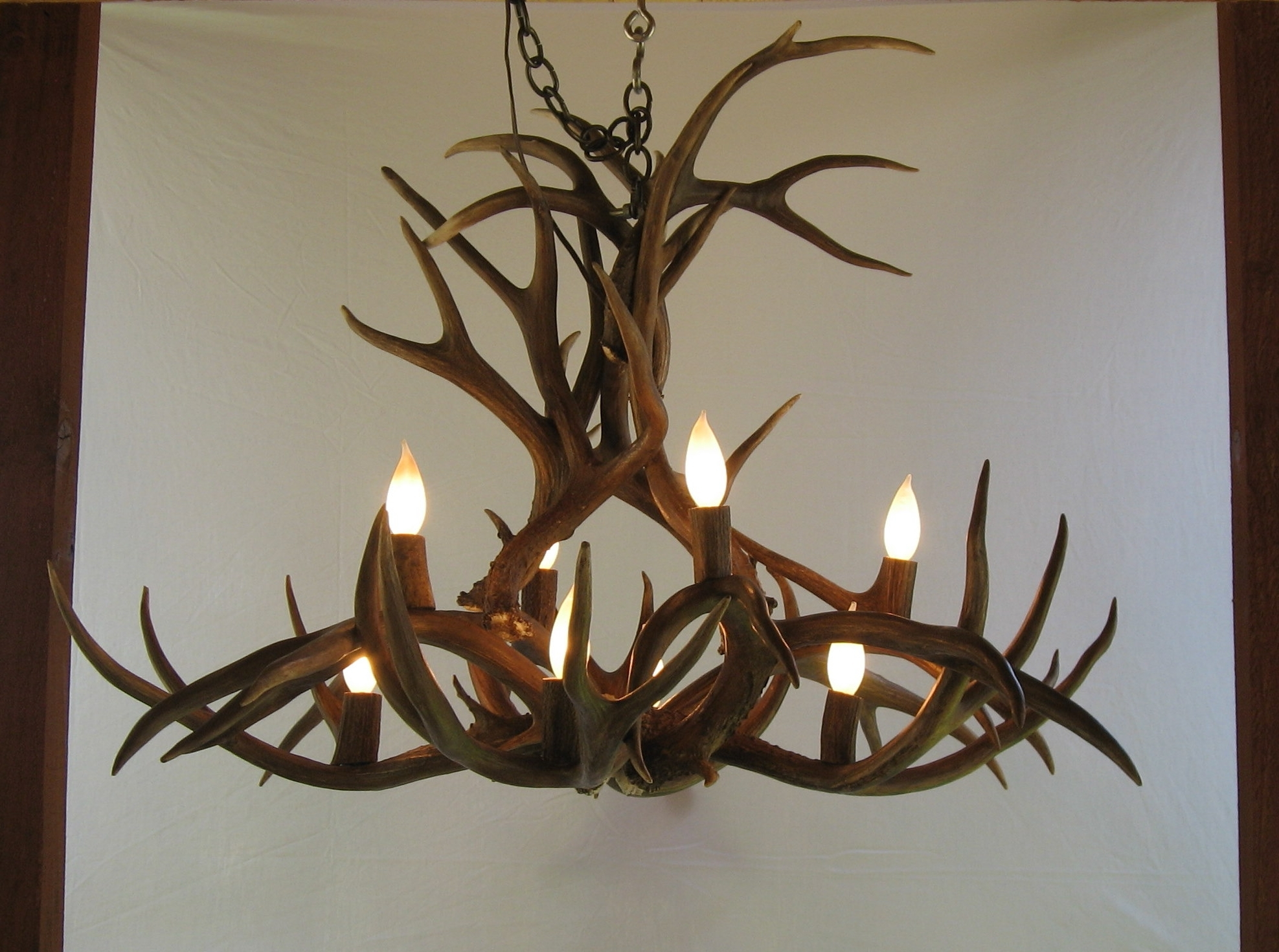 Antler Ideas – Grousedays With Regard To Most Current Turquoise Antler Chandeliers (View 9 of 15)
