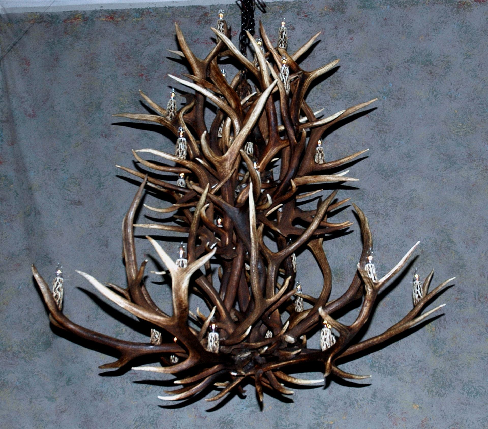 Best And Newest Antler Chandeliers, Deer Antler Chandelier, Deer Antler Lamps Regarding Large Antler Chandelier (View 6 of 15)