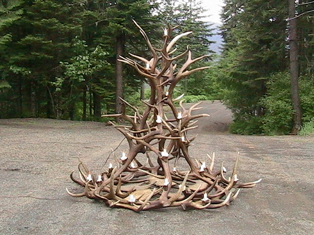 Featured Photo of Large Antler Chandelier