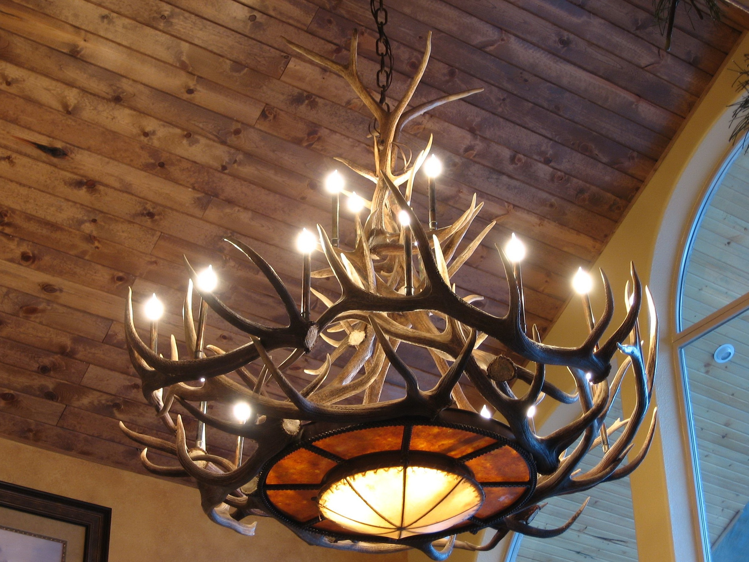 Light : Chandelier Antler Chandeliers For Sale Picture Ceiling Faux For Preferred Large Antler Chandelier (View 14 of 15)