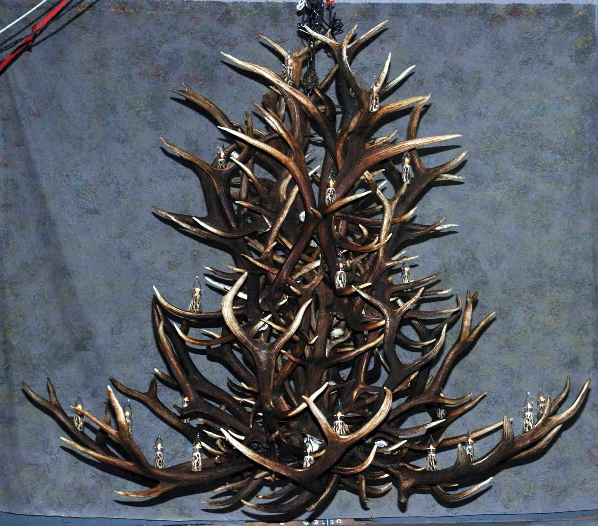 Popular Antler Chandeliers, Deer Antler Chandelier, Deer Antler Lamps For Large Antler Chandelier (View 4 of 15)