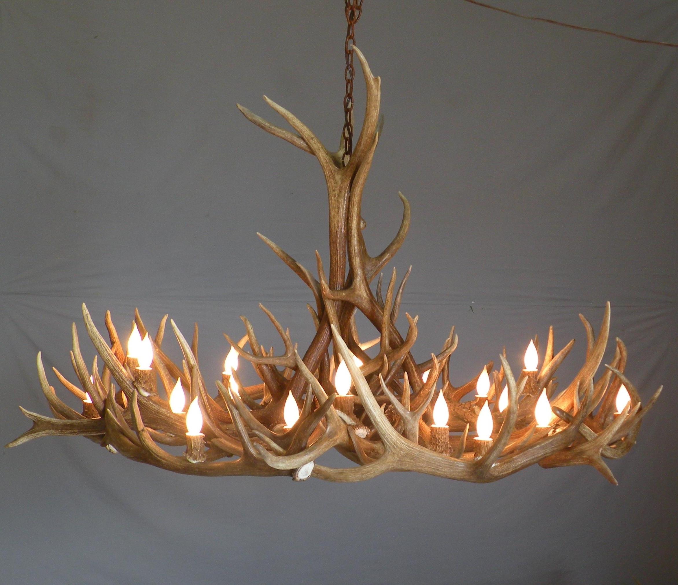 Stag Horn Chandelier In Well Known Lighting: Elk Antler Chandelier For Inspiring Unique Lighting Design (View 8 of 15)