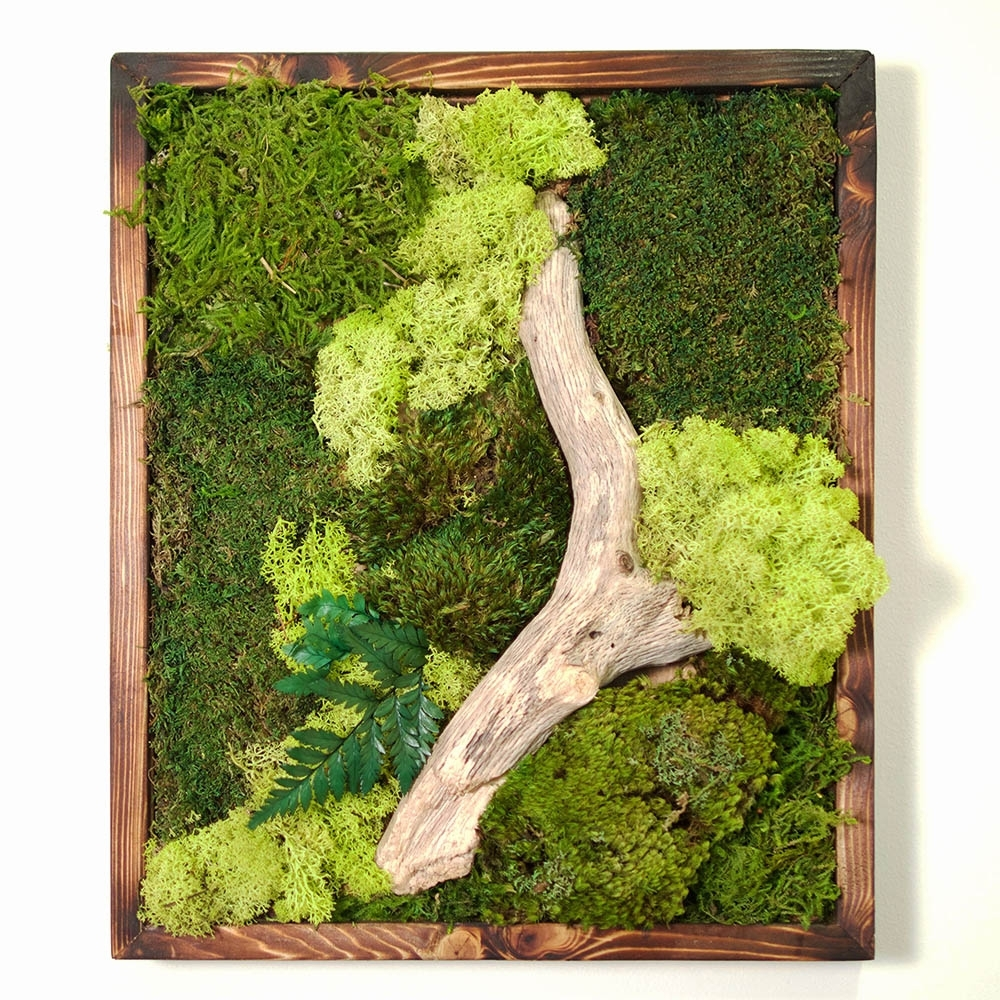 18X18 Moss Wall Art – Dark Frame – Real Bodywork For Well Liked Moss Wall Art (Gallery 4 of 15)
