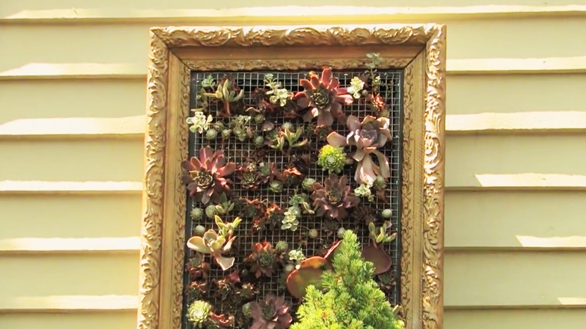 2018 Living Wall Art Inside Creating Living Wall Art – Youtube (View 5 of 15)