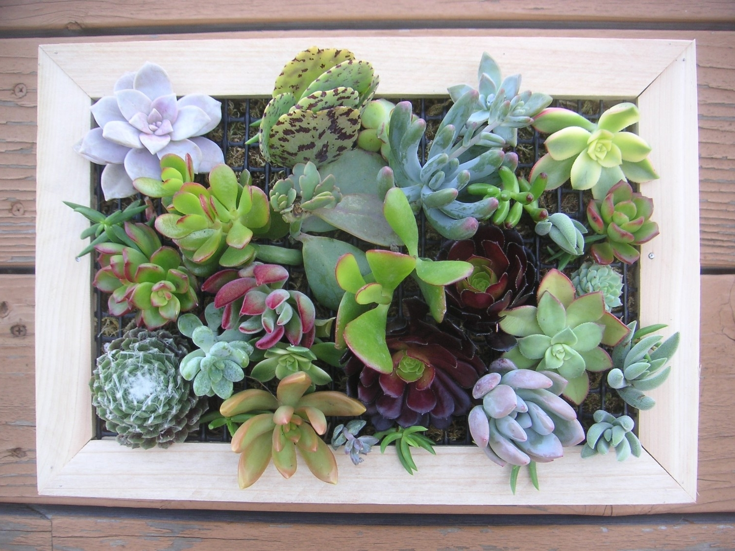 97 Living Wall Art Succulents An Old Picture Frame In Living Wall with regard to Preferred Living Wall Art