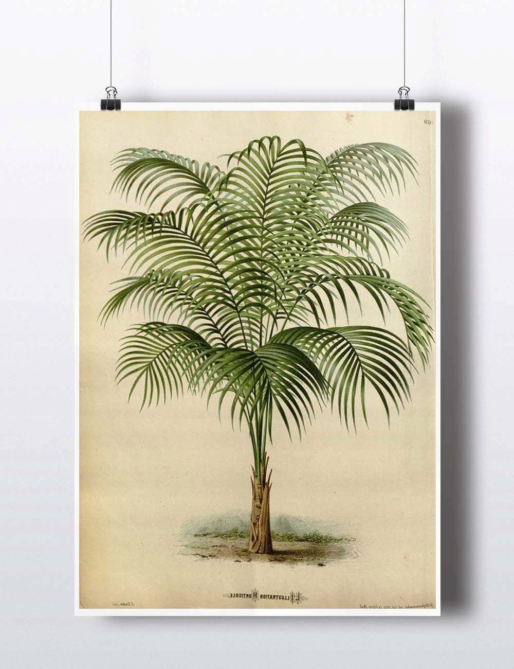 Antique 1800S Palm Tree Print Art Print Poster Palm Tree Wall Decor Pertaining To Fashionable Palm Tree Wall Art (View 1 of 15)