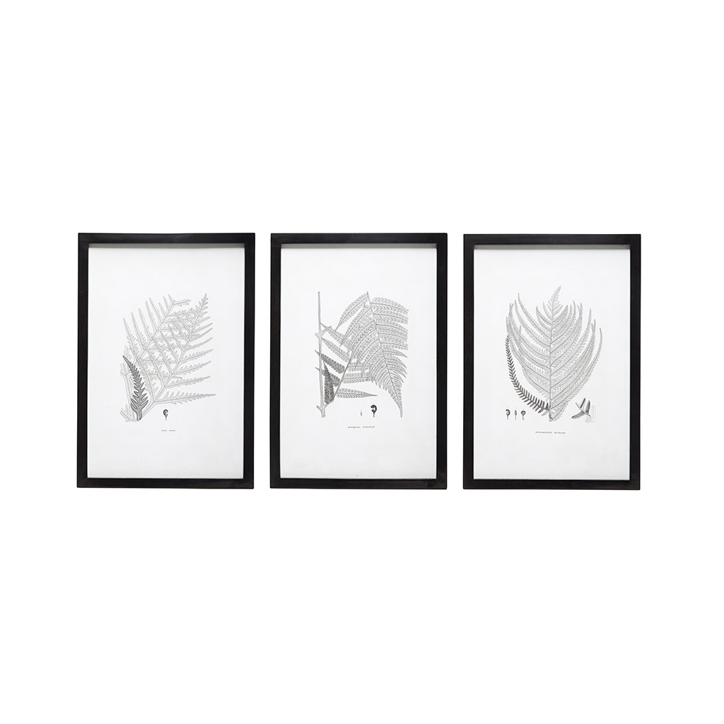 Black And White Wall Art Throughout Most Popular Set Of 3 Black & White Wall Art Polypody Framed Print Poster Picture (View 6 of 15)