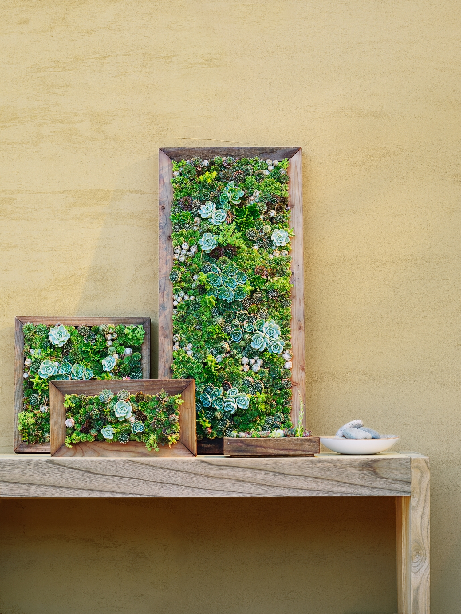 Famous How To Make Vertical Succulent Gardens – Sunset Magazine Inside Living Wall Art (View 5 of 15)