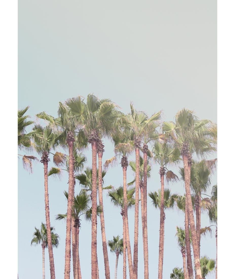 Fashionable Pink Palm Trees Wall Digital Art Gallery Palm Tree Wall Art – Prix For Palm Tree Wall Art (View 4 of 15)