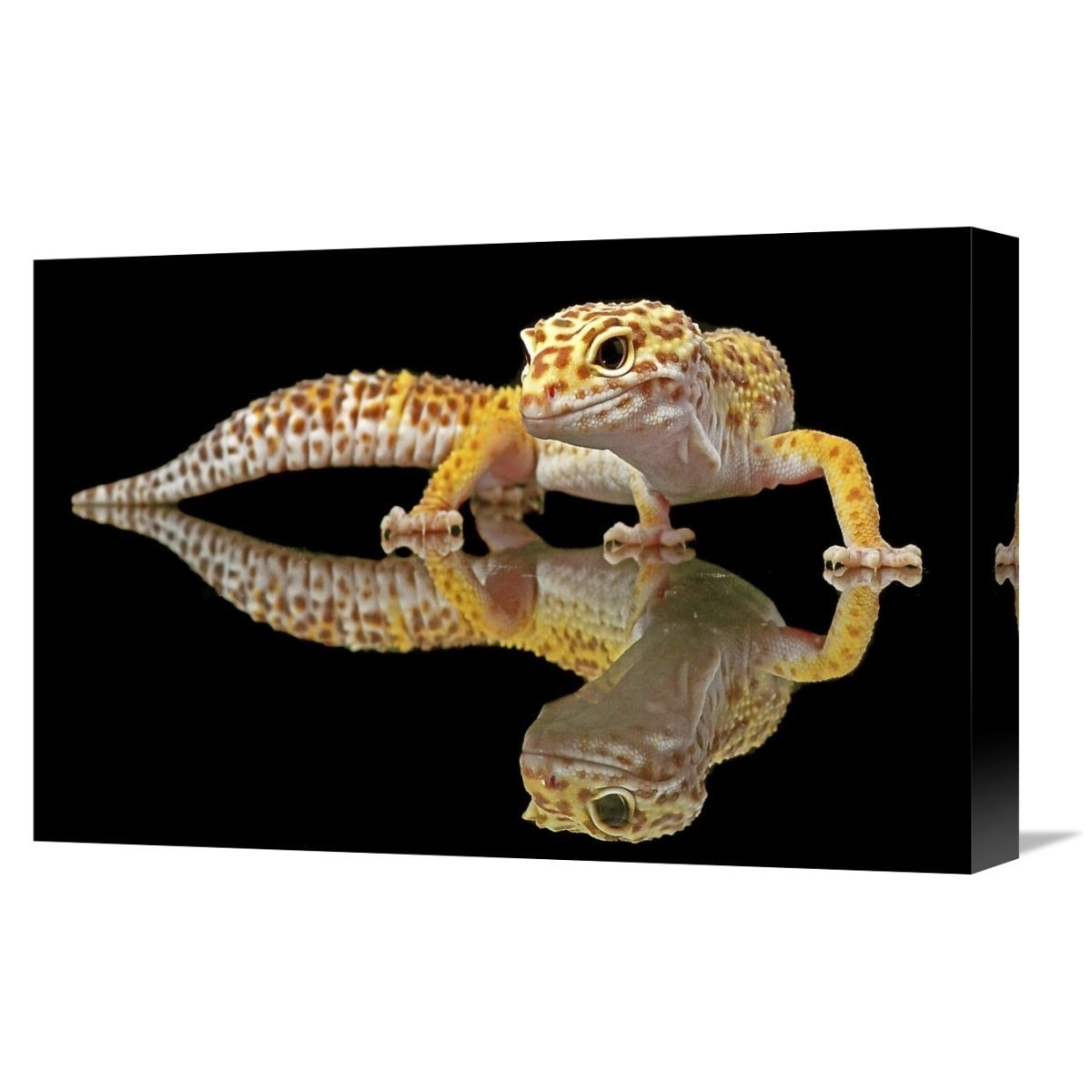 Gecko Canvas Wall Art With Regard To Latest Shop Global Gallery, Dikky Oesin 'leopard Gecko' Stretched Canvas (View 7 of 15)