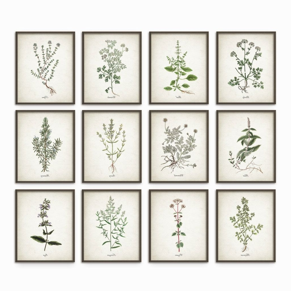 Herb Wall Art With Regard To Widely Used Kitchen Herbs Wall Art Print Set Of 12 – Vintage Botanical Herb (Gallery 15 of 15)