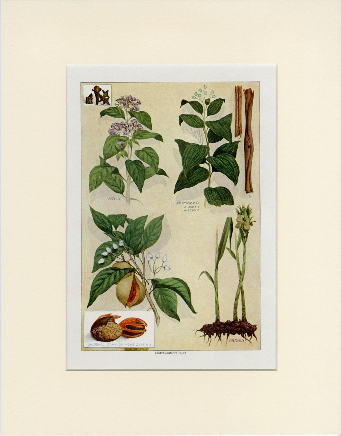 Herb Wall Art Within 2017 Vintage Herb Wall Art, Four Principal Spices: Cinnamon Clove Ginger (View 6 of 15)