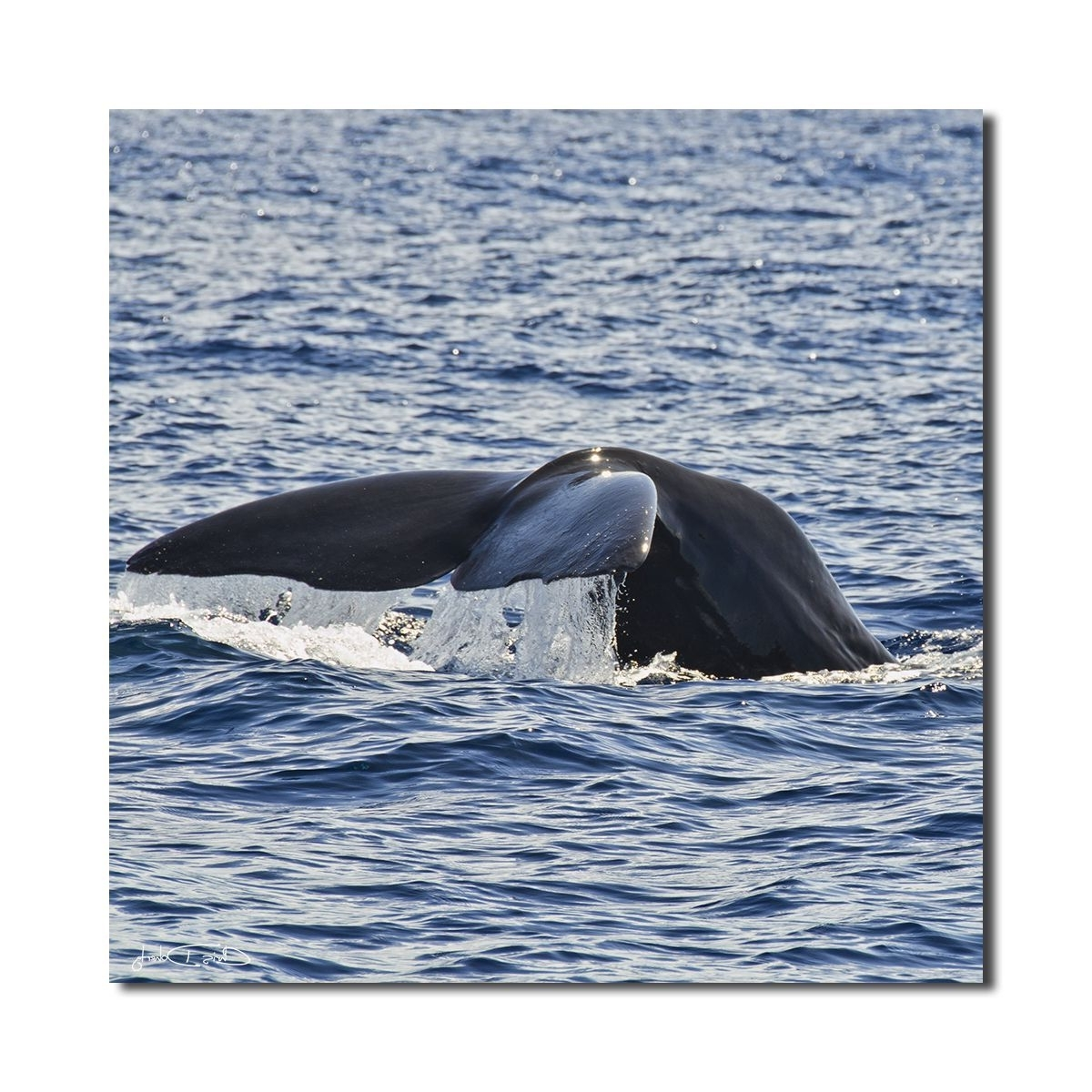 Latest Ready2Hangart Christopher Doherty 'whale' Wall Art, Blue (View 4 of 15)