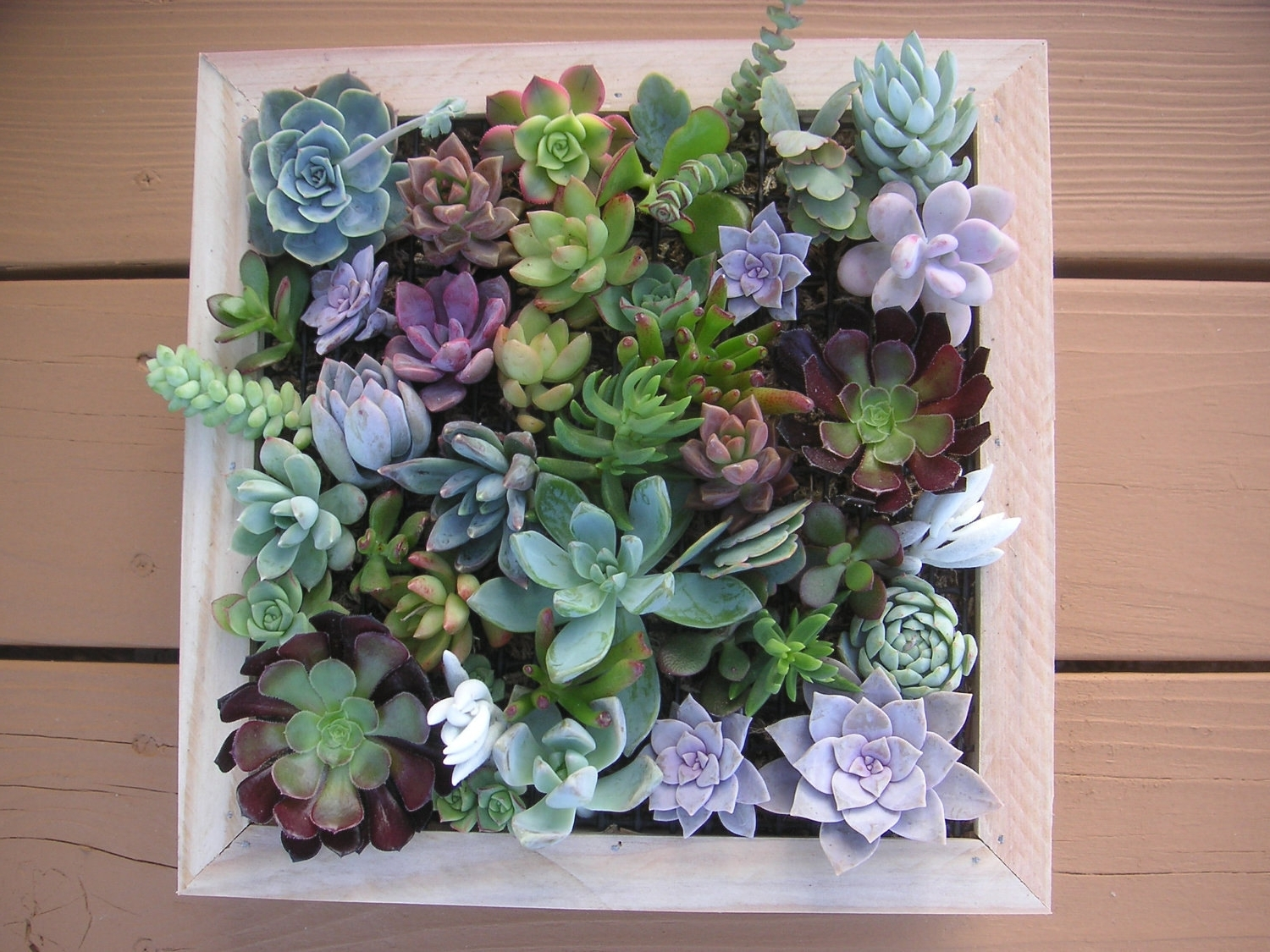 Latest Succulent Framed Wall Art – Elitflat Throughout Succulent Wall Art (View 3 of 15)