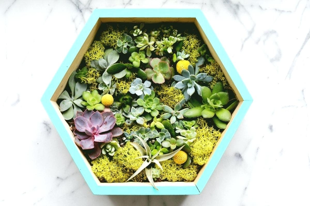 Latest Succulent Wall Decor Planter Diy Art Print – Restorethelakes With Succulent Wall Art (View 14 of 15)