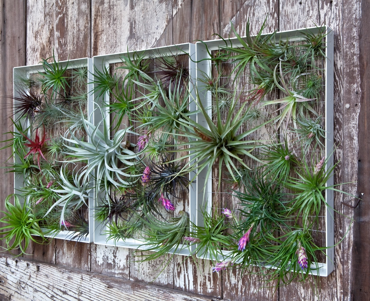 Living Wall Art Vertical Garden Framesairplantman – Design Milk Intended For Well Known Living Wall Art (View 8 of 15)