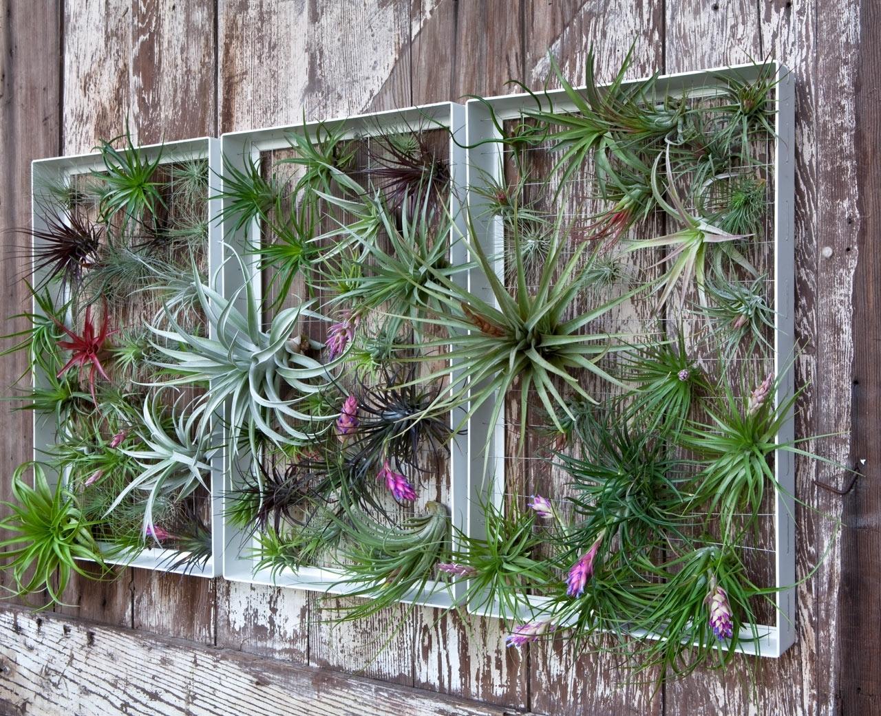 Living Wall Art Vertical Garden Framesairplantman – Design Milk Within Favorite Garden Wall Art (View 11 of 15)