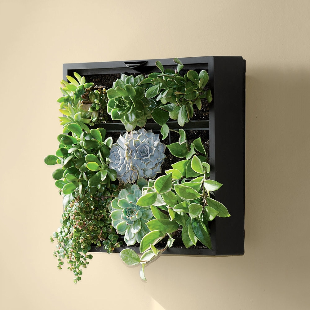 Living Wall Art With 2018 Living Art Green Wall / Tabletop Planter – The Green Head (View 6 of 15)