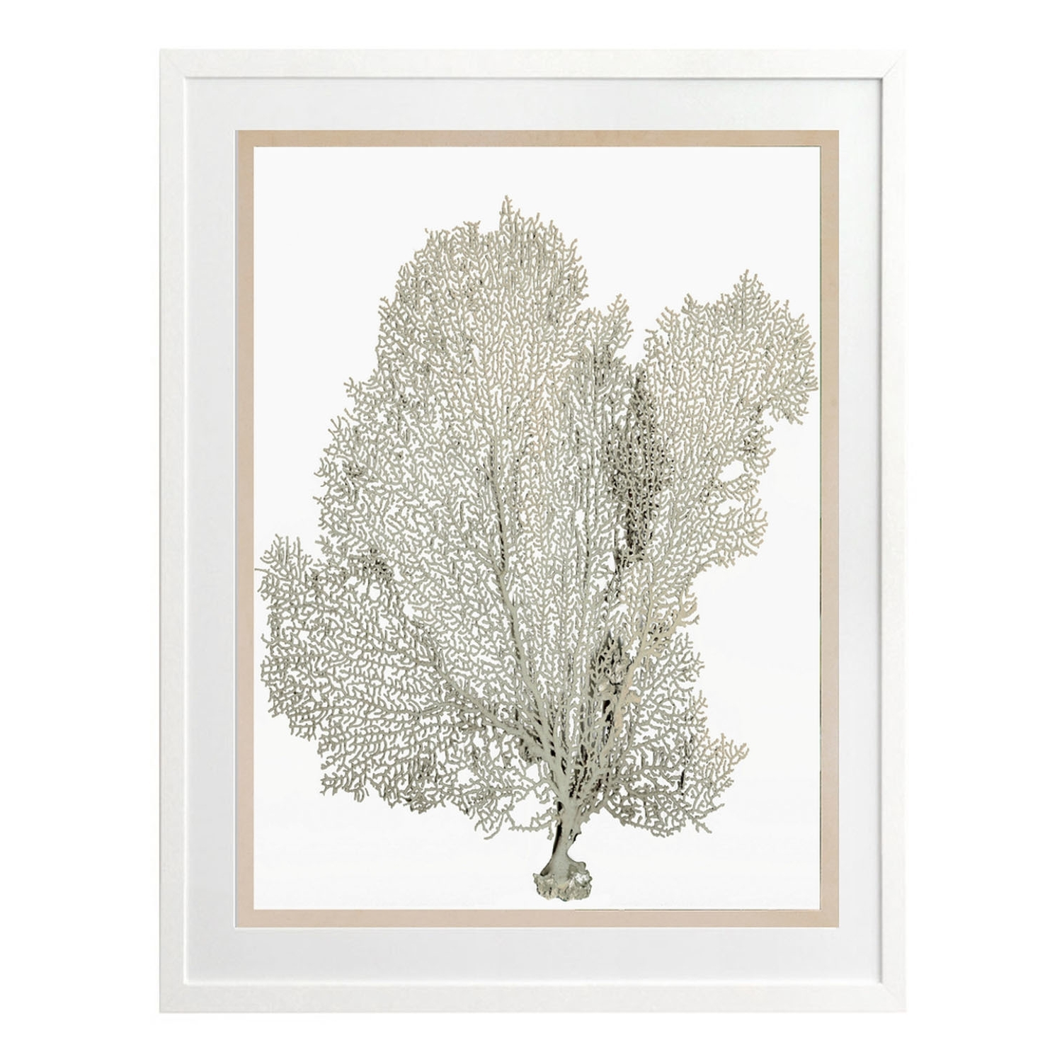 Featured Photo of Coral Wall Art