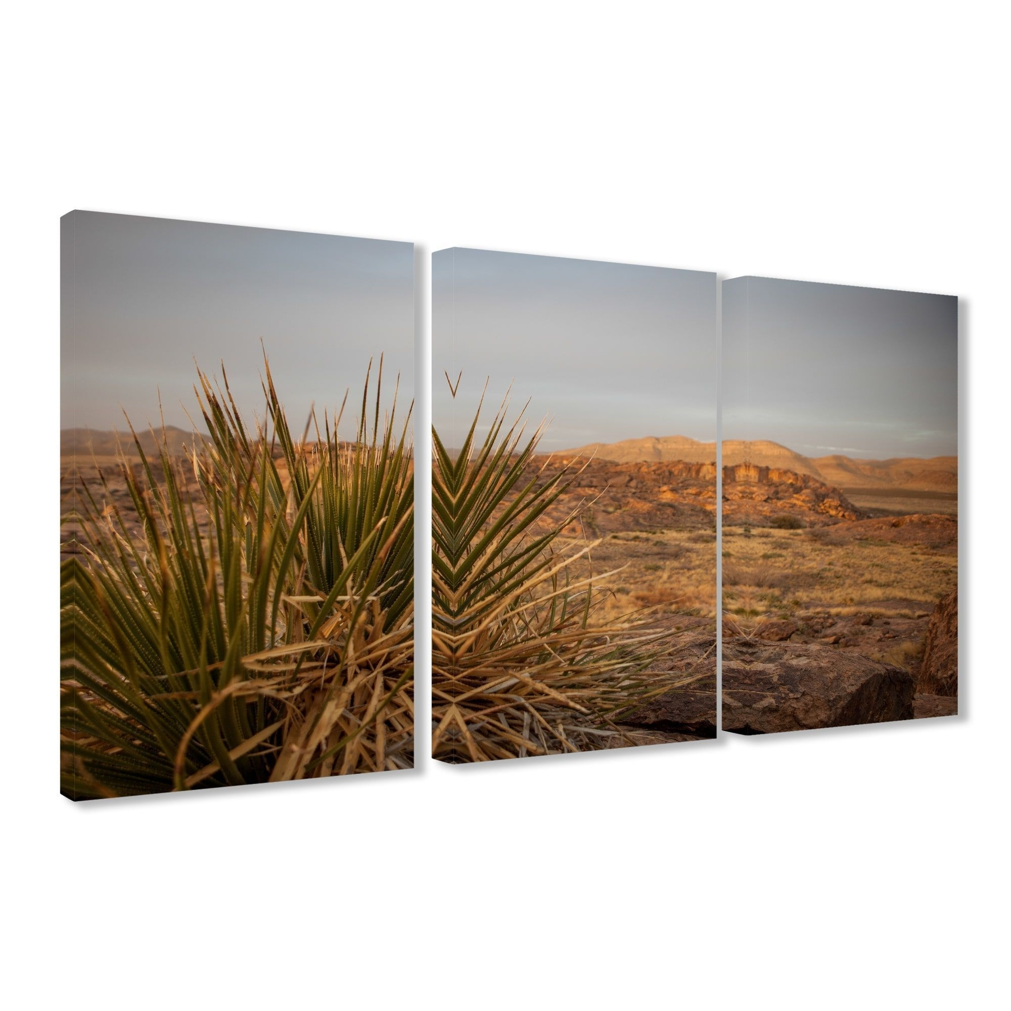 Most Recently Released Triptych Wall Art Inside Stupell High Desert Yucca Photograph Triptych Stretched Canvas Wall (View 12 of 15)