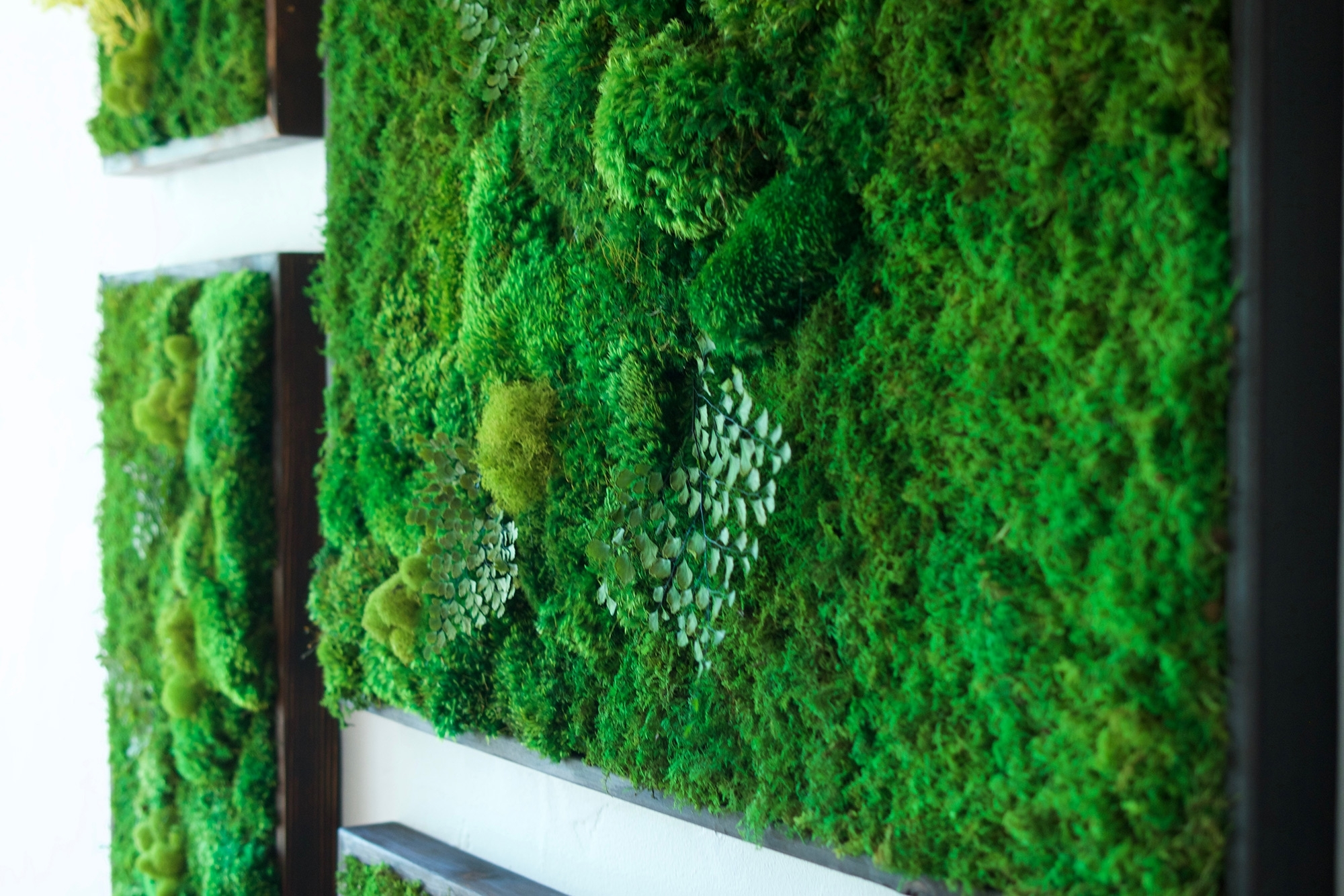 """Newest Moss Wall Art Intended For 58X58"""" Real Preserved Moss Wall Art Green Wall Collage No Sticks (View 8 of 15)"""