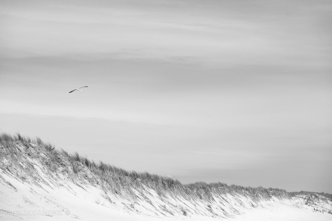 Popular Photo Print Of Southampton Long Island Beach Dunes Seagull Black And In Long Island Wall Art (View 12 of 15)