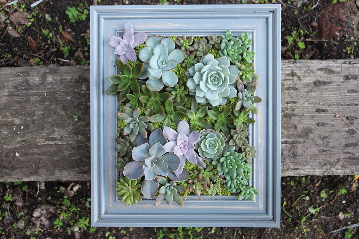 Recent Diy A Framed Succulent Wall Planter – Do It Yourself Projects – Lonny Throughout Succulent Wall Art (View 8 of 15)