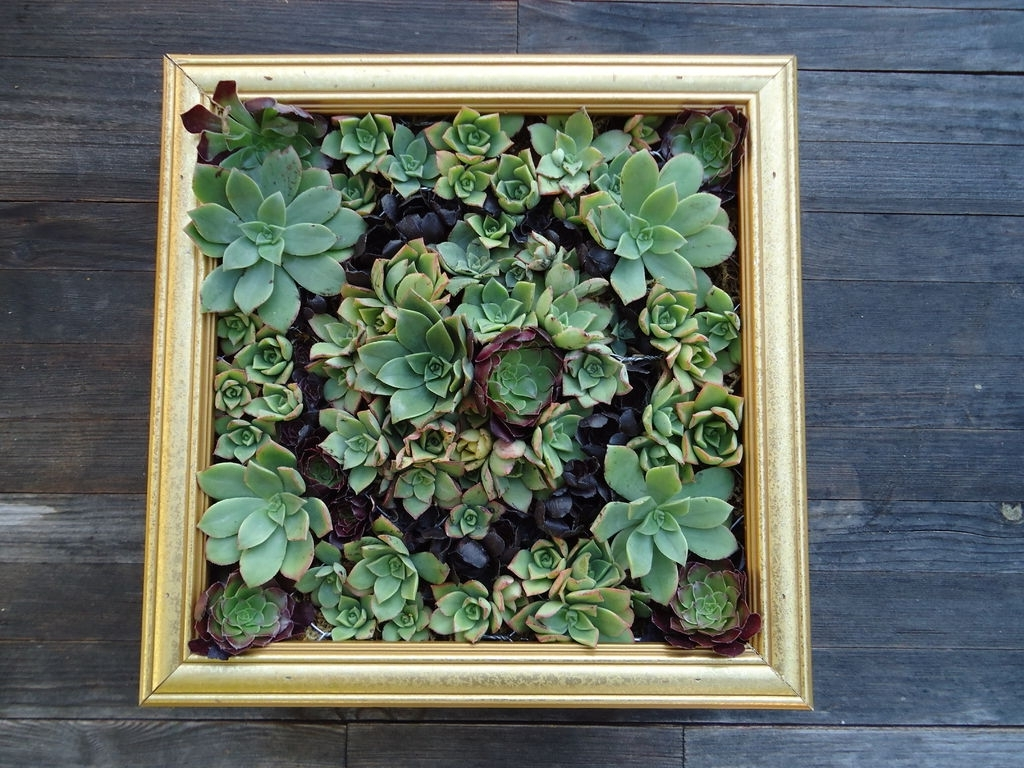 Succulent Wall Art: 9 Steps (With Pictures) In Famous Living Wall Art (View 15 of 15)