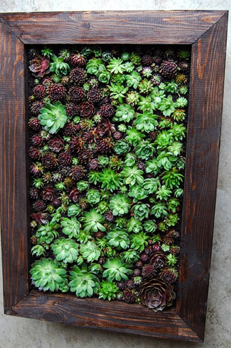 Succulent Wall Art – Talentneeds – Regarding Favorite Succulent Wall Art (View 6 of 15)