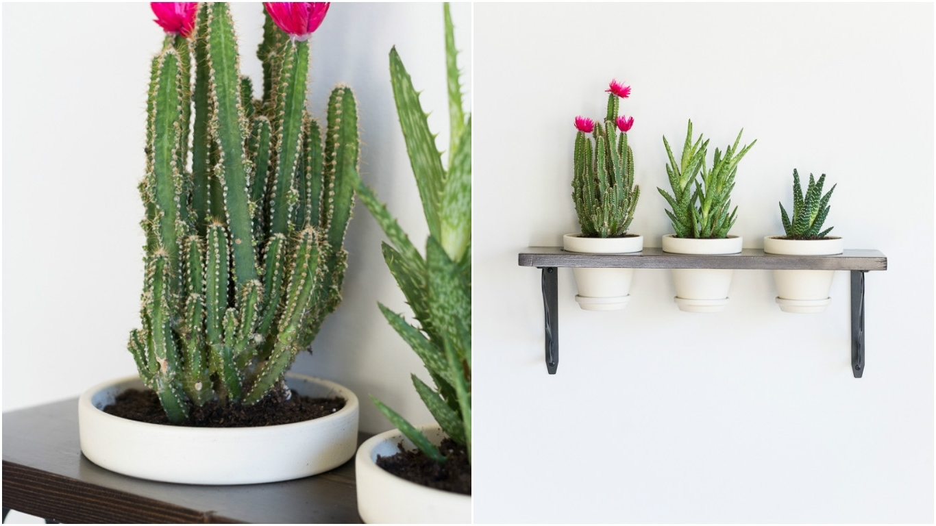 Succulent Wall Art With 2018 Turn Plants Into Wall Art With This Diy Hanging Succulent Garden (View 11 of 15)
