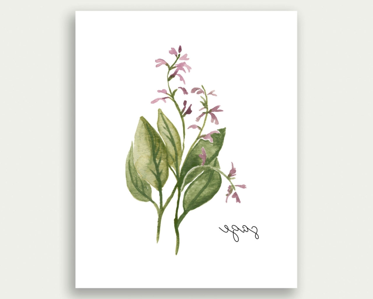 Watercolor Landcolor Skycolor — Herb Wall Art, Herb Print, Sage Wall Throughout Most Recent Herb Wall Art (View 13 of 15)