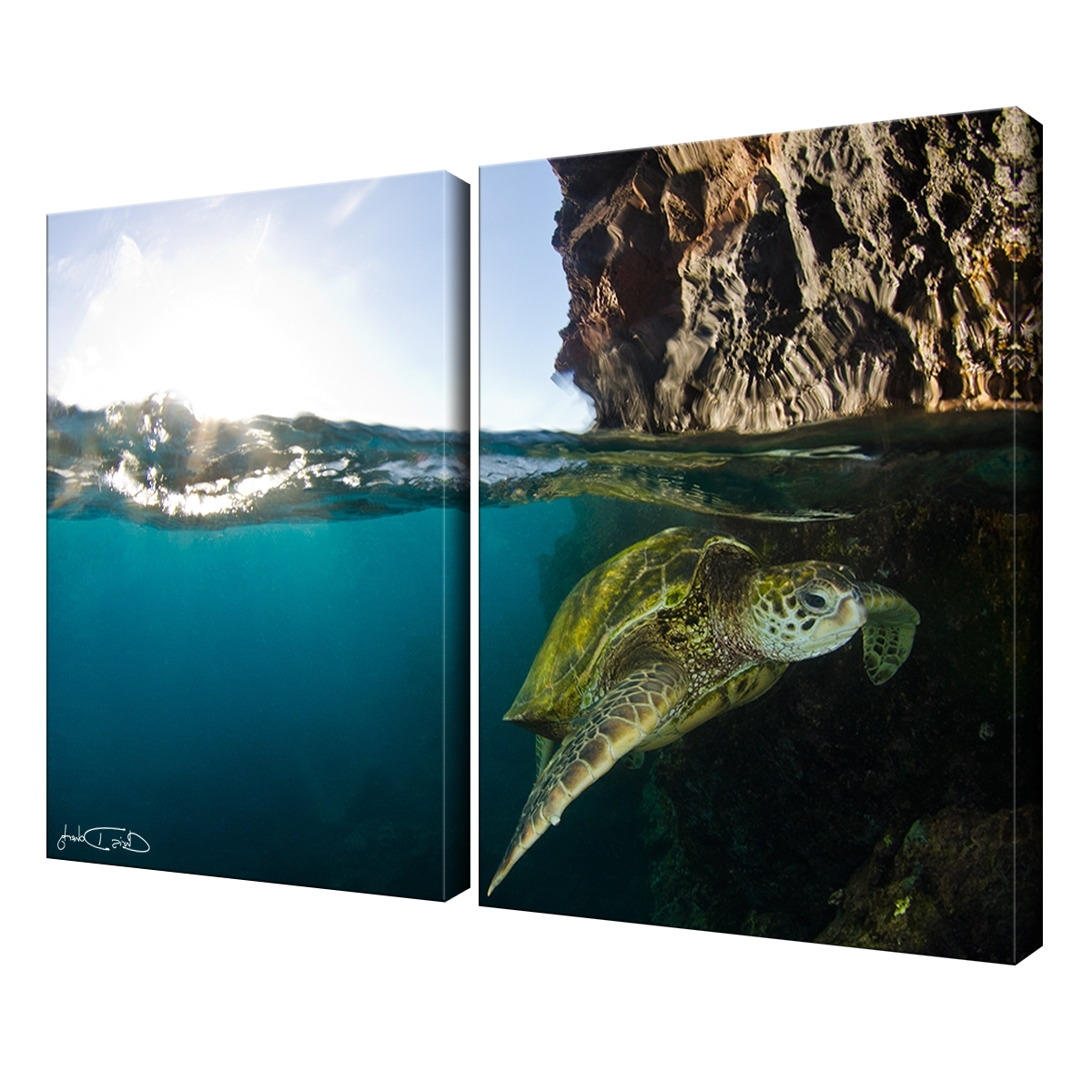 Well Known Shop Christopher Doherty 'sea Turtle' Canvas Wall Art (2 Piece For Sea Turtle Canvas Wall Art (View 13 of 15)