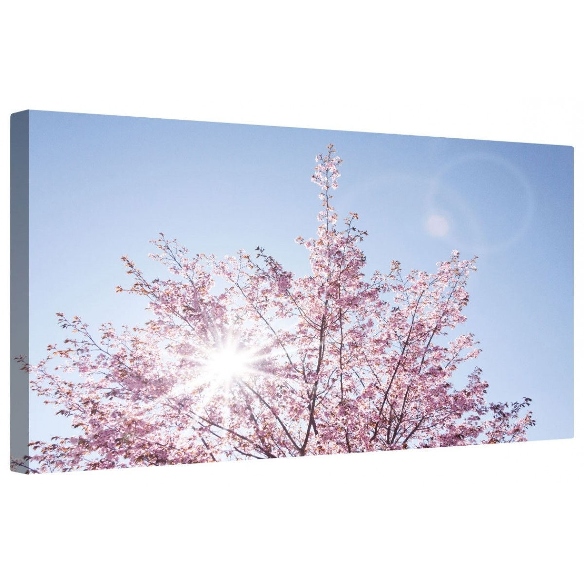Well Liked Cherry Blossom Wall Art Within Canvart (View 9 of 15)