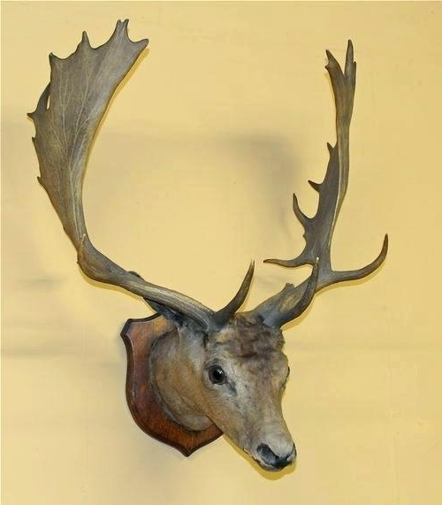 2018 Stags Head Wall Art Pertaining To Stag Heads Wall Decoration – Nomadswe (View 1 of 15)