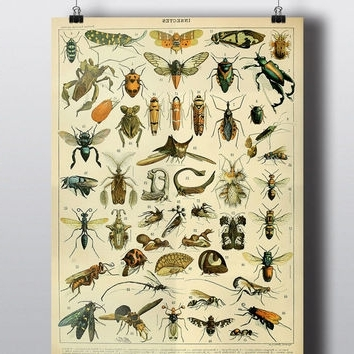 2018 Theblackvinyl On Etsy On Wanelo Inside Insect Wall Art (View 3 of 15)