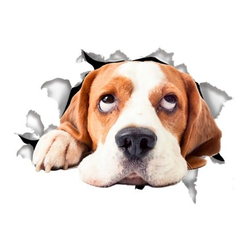 [%3D Wall Decal Sticker, [Hound Dog] Removable Wall Art Sticker Decal Inside Fashionable Dogs 3D Wall Art|Dogs 3D Wall Art For Favorite 3D Wall Decal Sticker, [Hound Dog] Removable Wall Art Sticker Decal|Well Known Dogs 3D Wall Art Throughout 3D Wall Decal Sticker, [Hound Dog] Removable Wall Art Sticker Decal|Widely Used 3D Wall Decal Sticker, [Hound Dog] Removable Wall Art Sticker Decal Throughout Dogs 3D Wall Art%] (View 14 of 15)