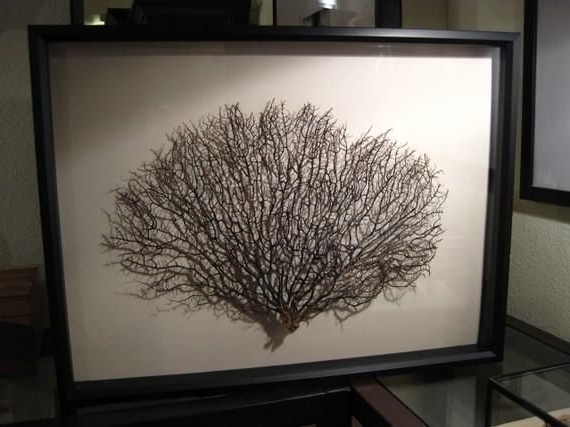 A Simply Framed Sea Fan Looks Contemporary Since It Is Essentially A Throughout Current Sea Fan Wall Art (Gallery 1 of 15)