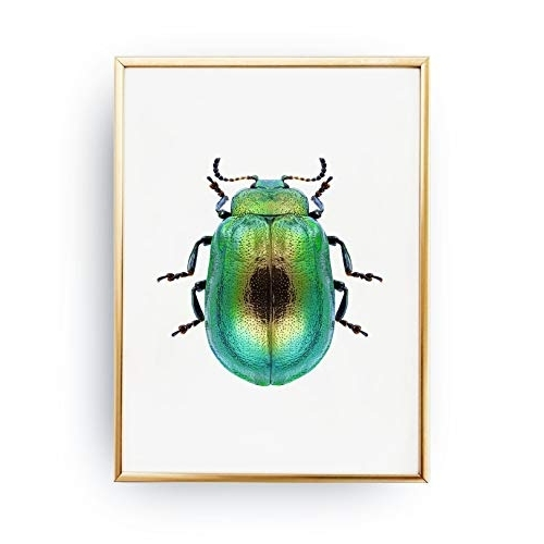 Amazon: Beetle Poster, Beetle Print, Beetle Illustration, Insect For Trendy Insect Wall Art (Gallery 9 of 15)