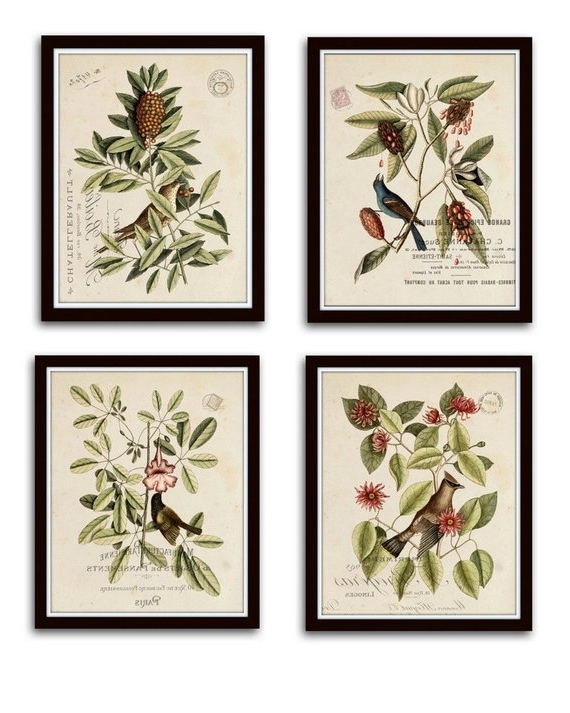 Botanical Prints Etsy For Well Known Vintage Bird And Botanical Print Set No (View 6 of 15)