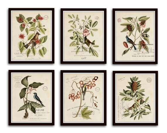 Botanical Prints Etsy Regarding Newest Vintage Bird And Botanical Print Set No (View 9 of 15)