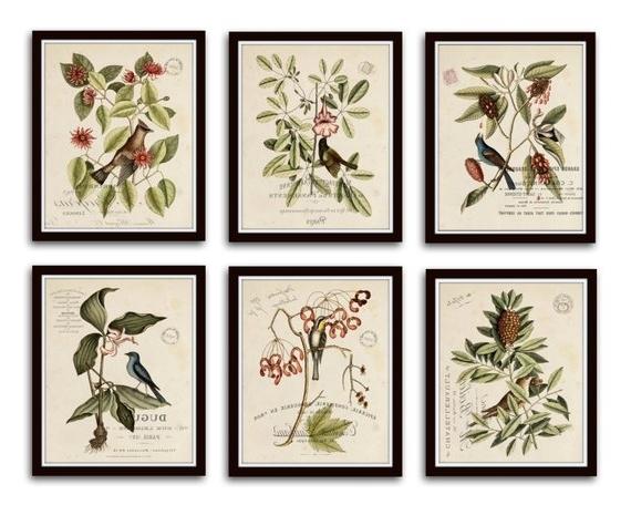 Botanical Prints Etsy Regarding Newest Vintage Bird And Botanical Print Set No (View 4 of 15)