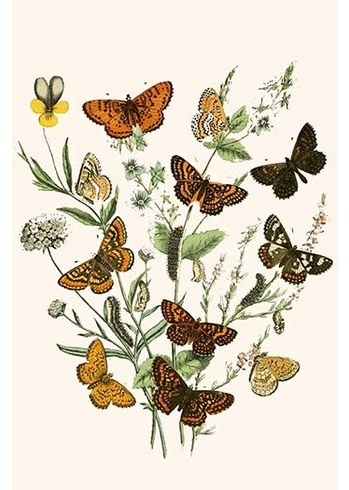 Buyenlarge 'european Butterflies And Moths'w.f (View 2 of 15)