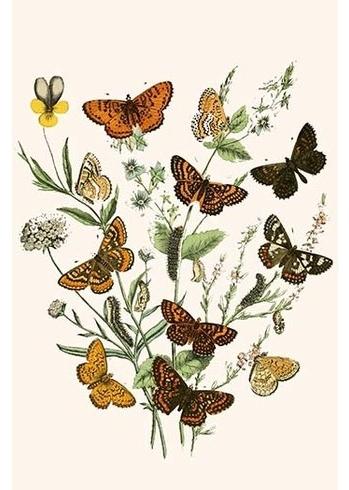 Buyenlarge 'european Butterflies And Moths'w.f (View 13 of 15)
